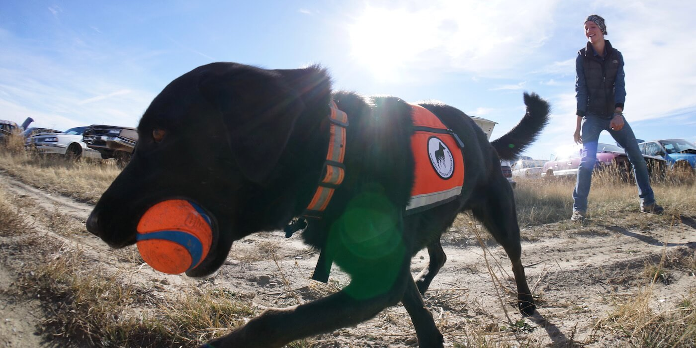black-dog-orange-ball