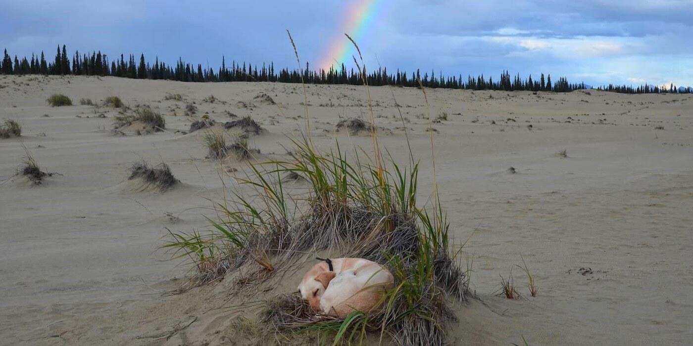 dog-and-rainbow