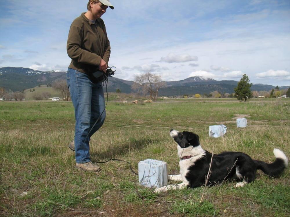 person-wire-black-white-dog