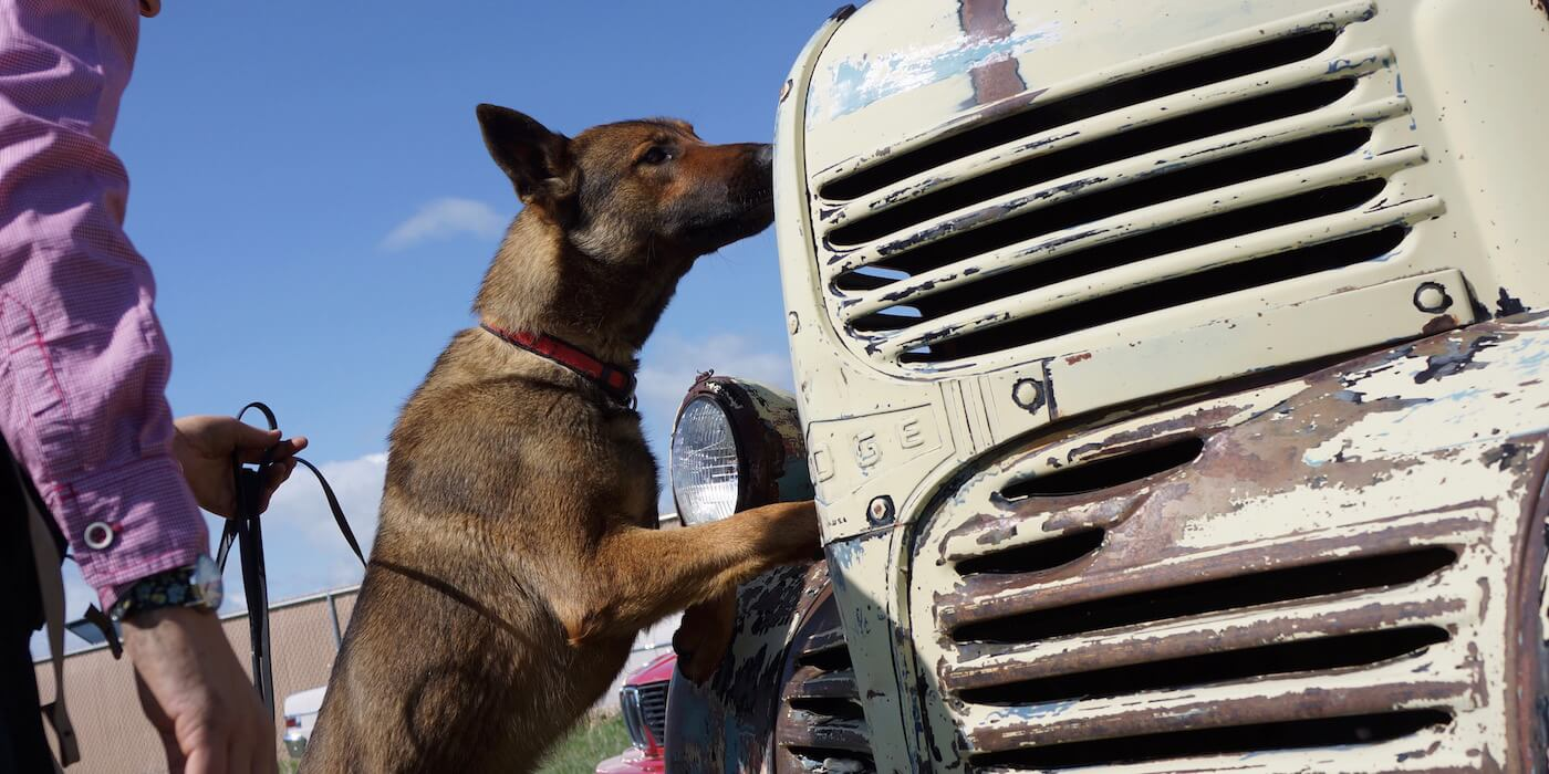 dog-sniffing-old-truck